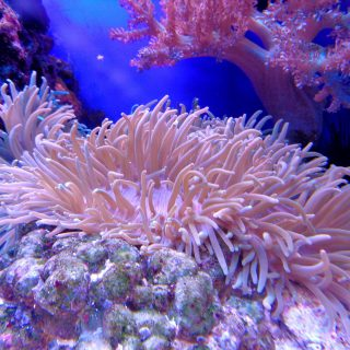 Science 8.5 Plant Processes and Marine Ecosystems
